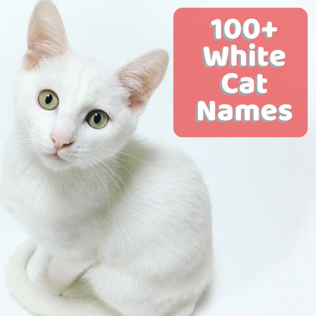 100+ Unusual and Unique Names for White Cats and Kittens
