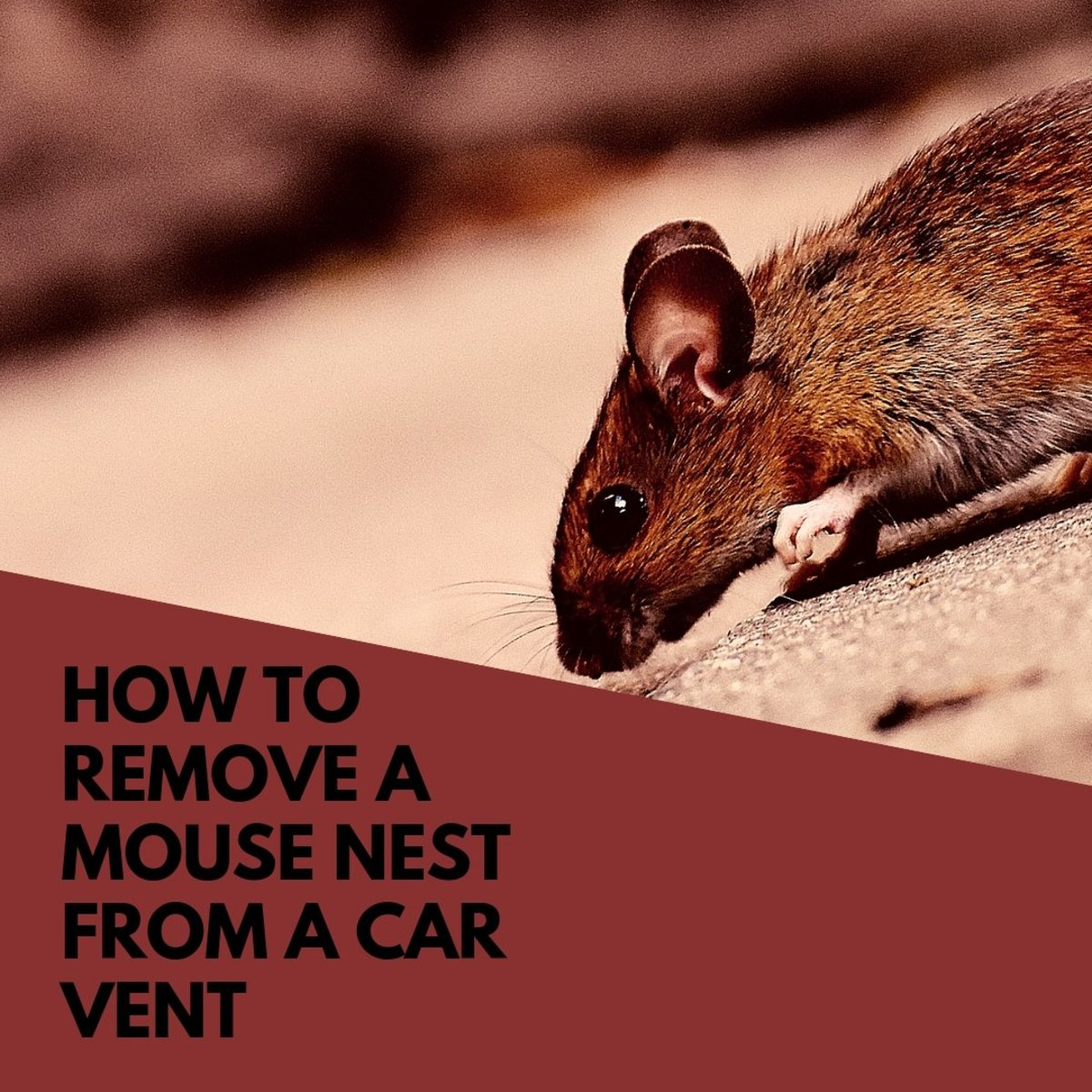 How to Remove a Mouse Nest From a Car's Ventilation System