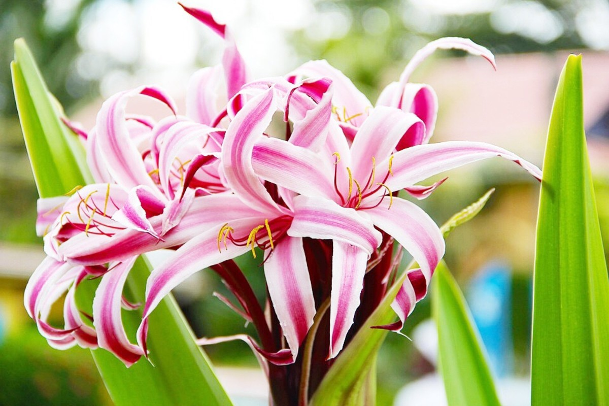 True lilies may be safe for humans, but they are extremely toxic to pets, including cats and dogs.