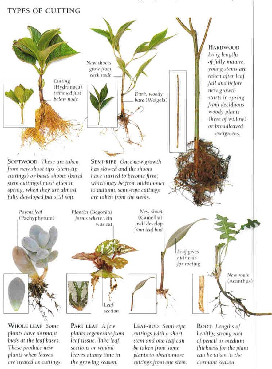 "Cutting Types courtesy of ""Plant Propagation"""