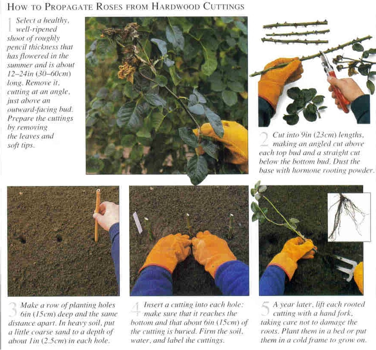 free-plants-from-easy-cuttings--snip-n-stick-details
