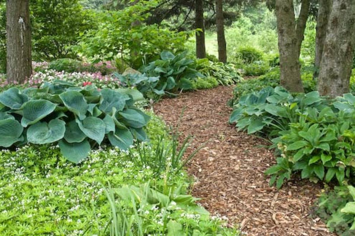 Varying shades of green and different leaf textures make this shady spot inviting.