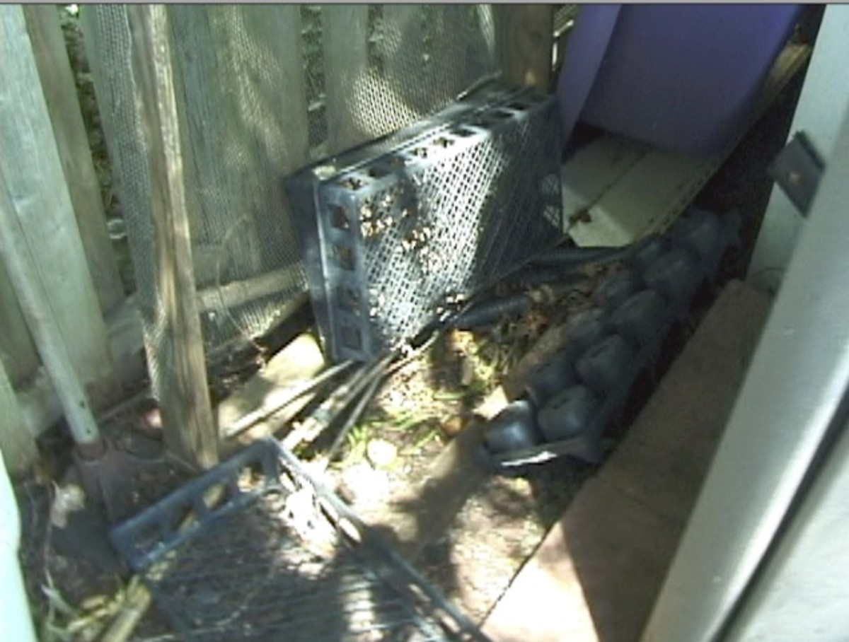 Place the trap in a spot you know they go to and cover it with surrounding plants or other items to conceal it.