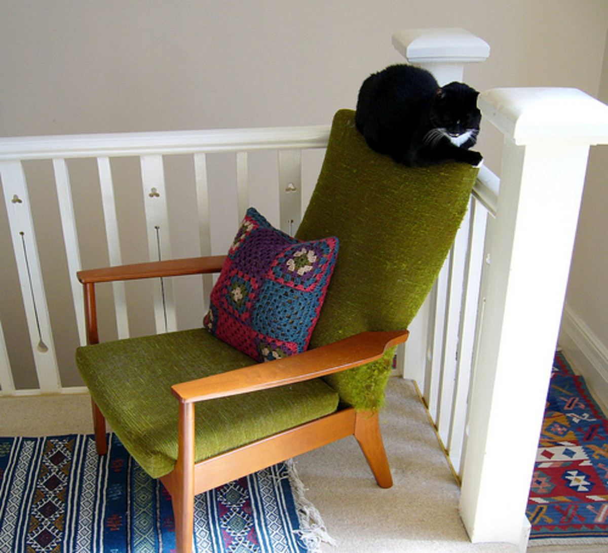 Wooden chair with green upholstery (and a cat)