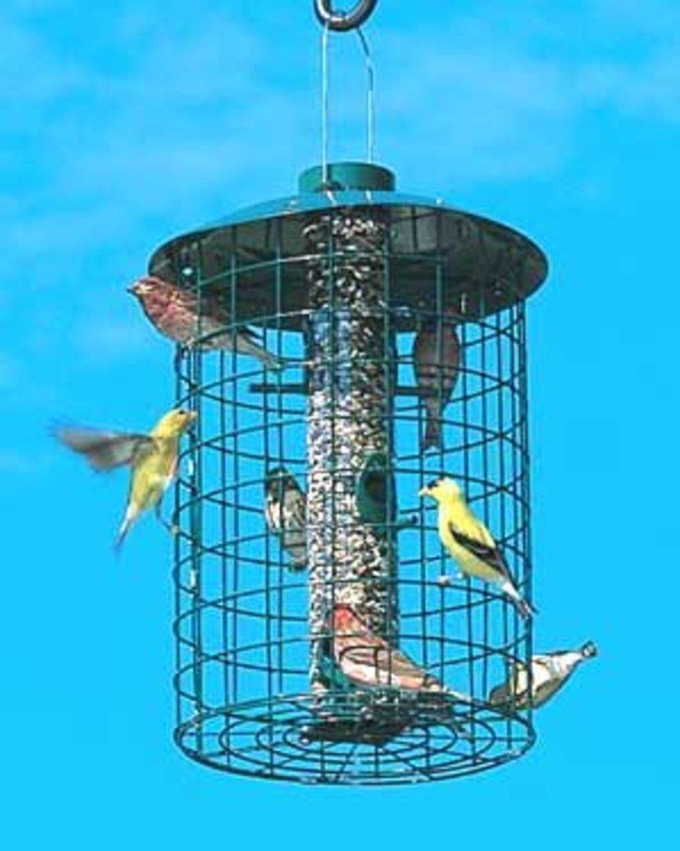 Make Bird Feeder Squirrel proof by Enclosing in a Cage