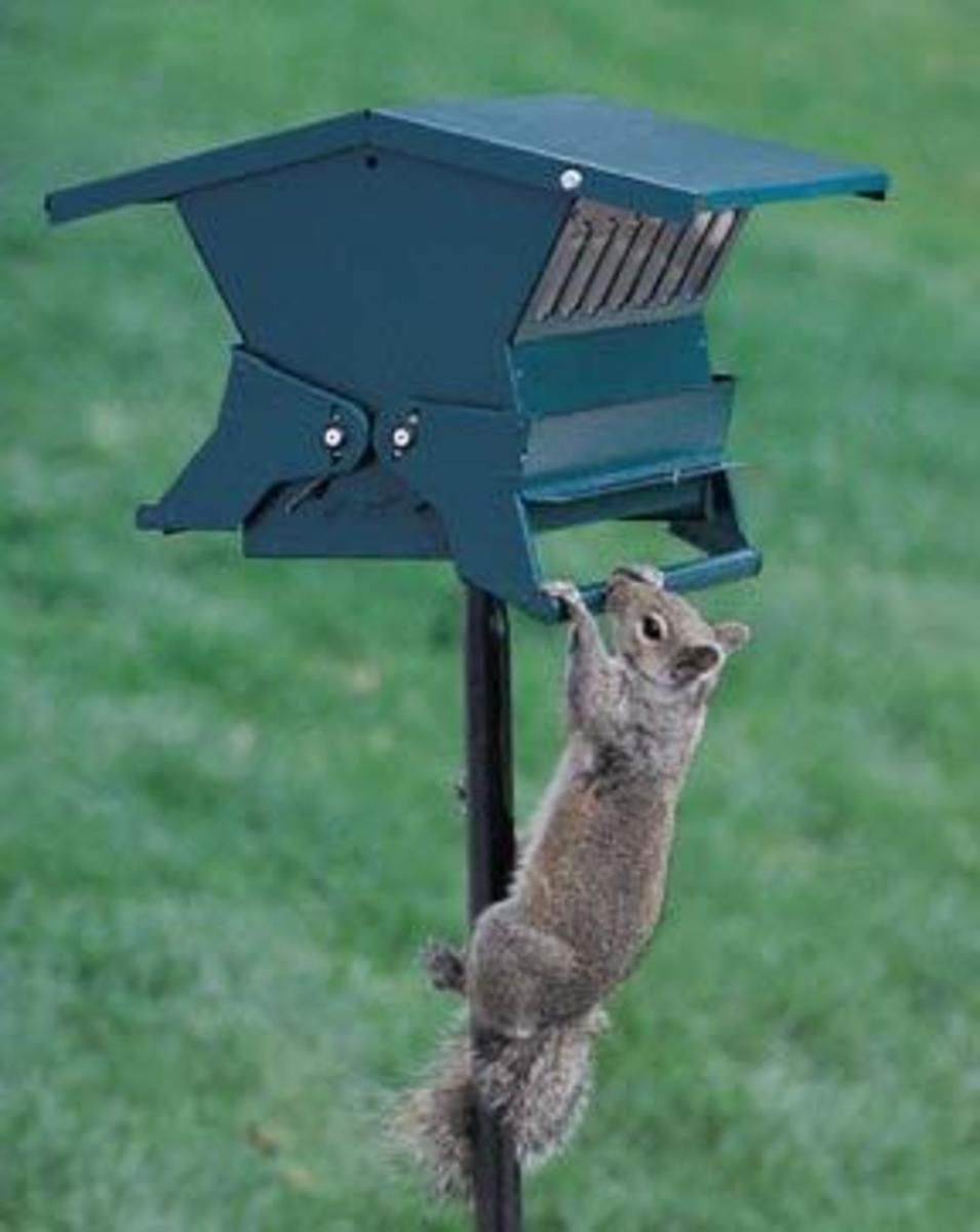 Squirrel Closes Food Ports Making this Bird Feeder Squirrel Proof