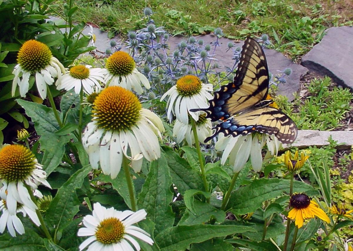 Flowers attract butterflies