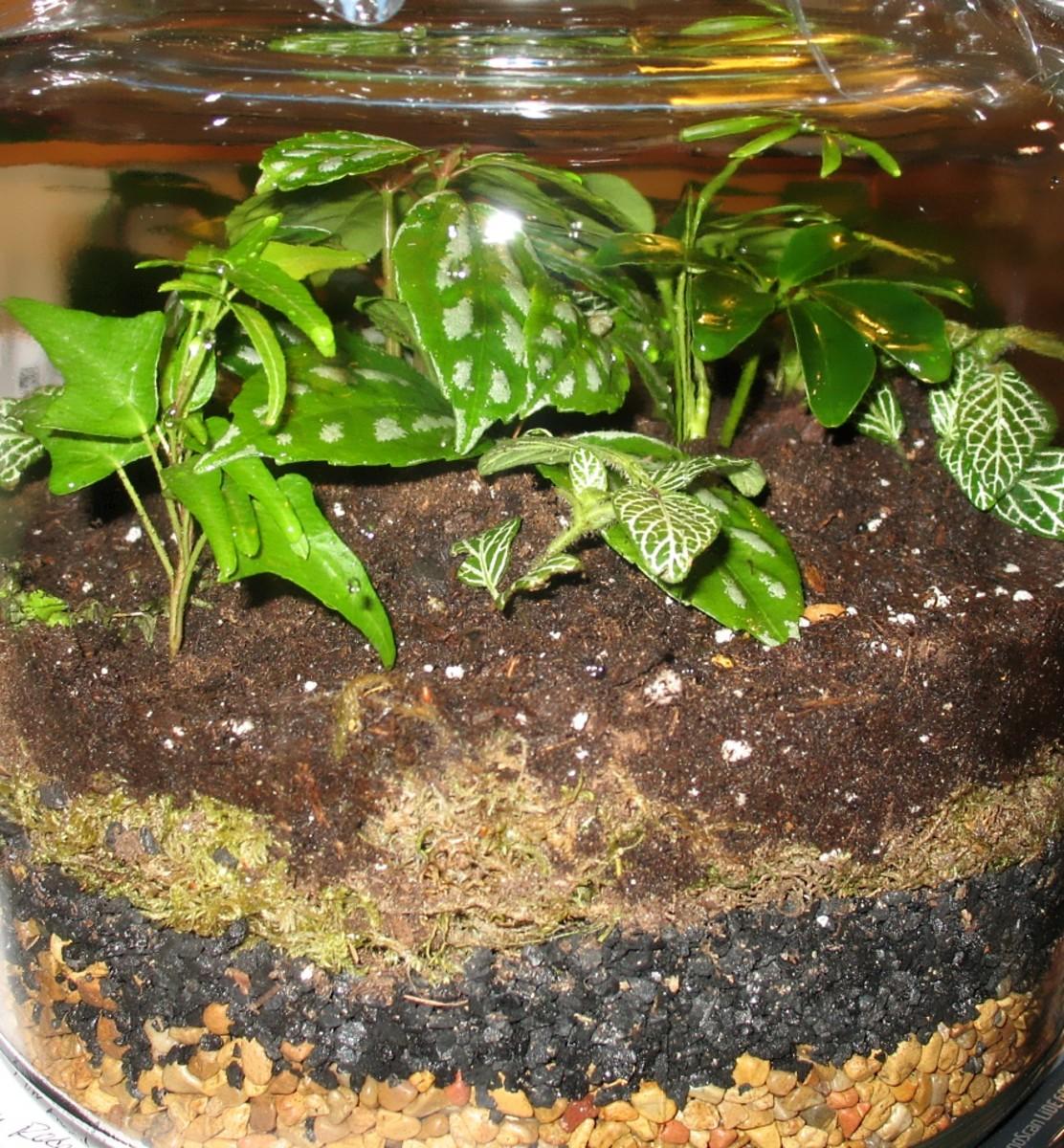 How To Make A Plant Terrarium Dengarden Home And Garden