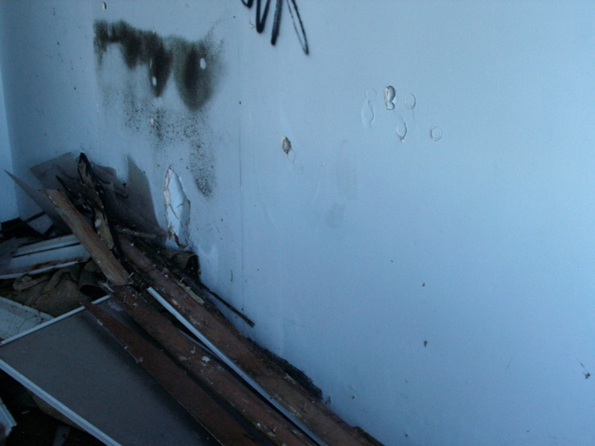 The Basics of Black Mold Removal