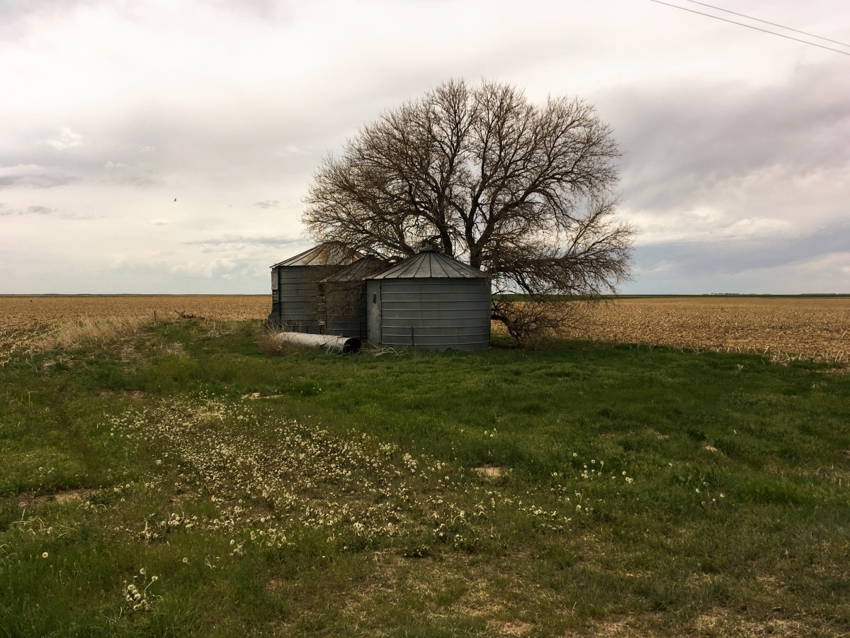 This site was probably an old homestead, but is now merely old bins surrounded by farm land.