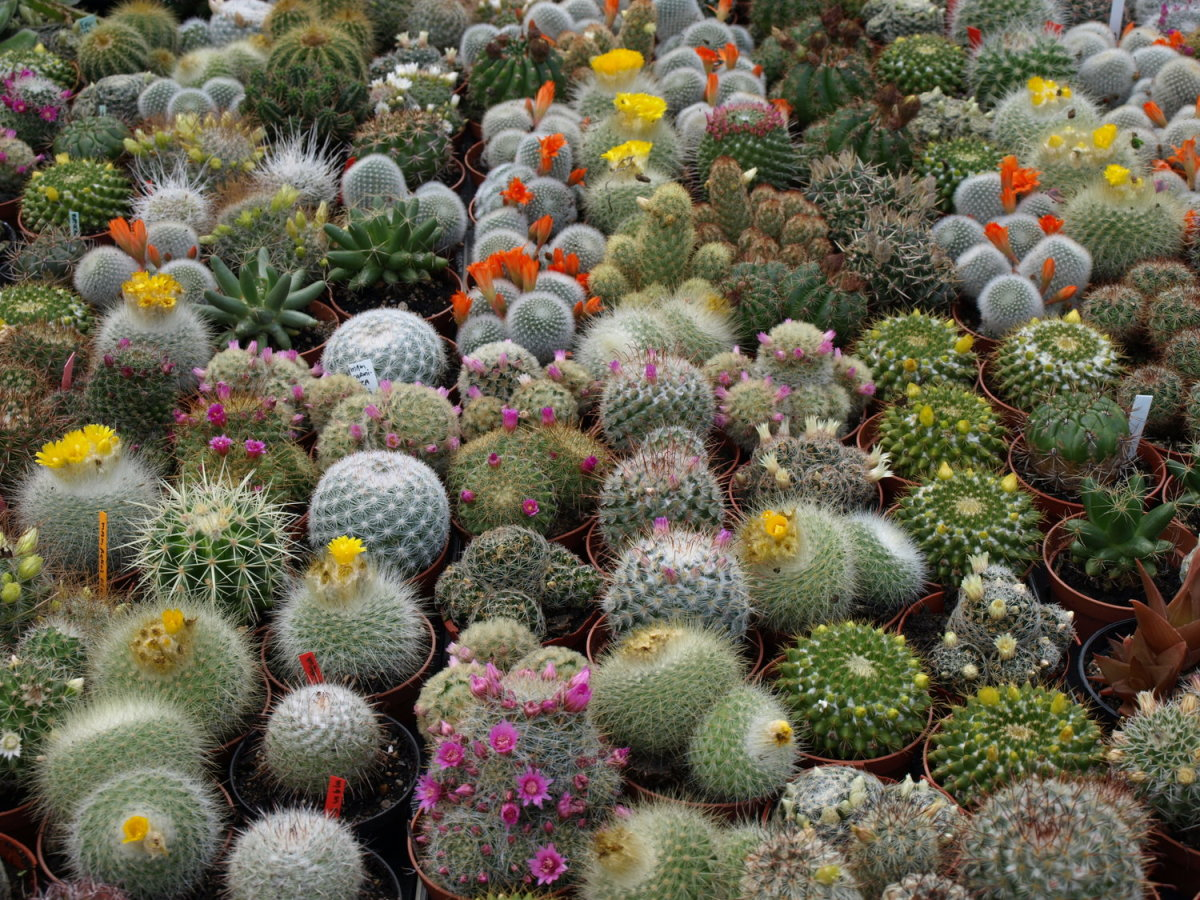 Every cactus is different, and has its own requirements for water, soil, and sun.