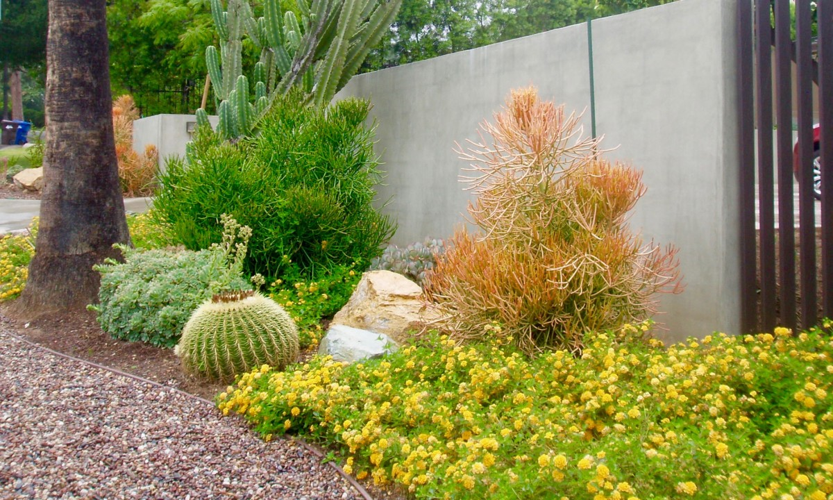 Across the street from this interesting Southern California garden is another one similarly landscaped, but with purple flowers and feathery grasses, interspaced by rocks and small white pebbles.