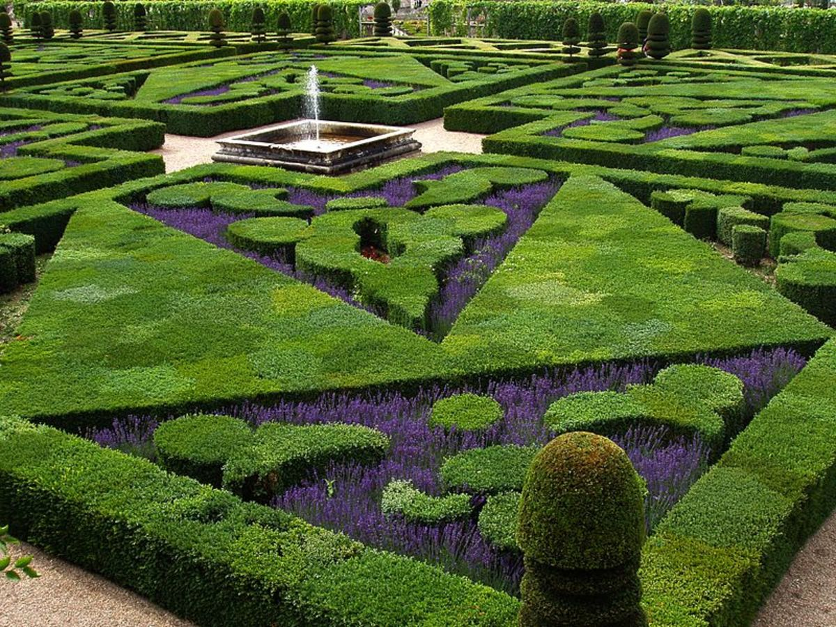 French formal garden has bushes pruned into geometric shapes, with smaller, darker flowers between to enhance the shapes.
