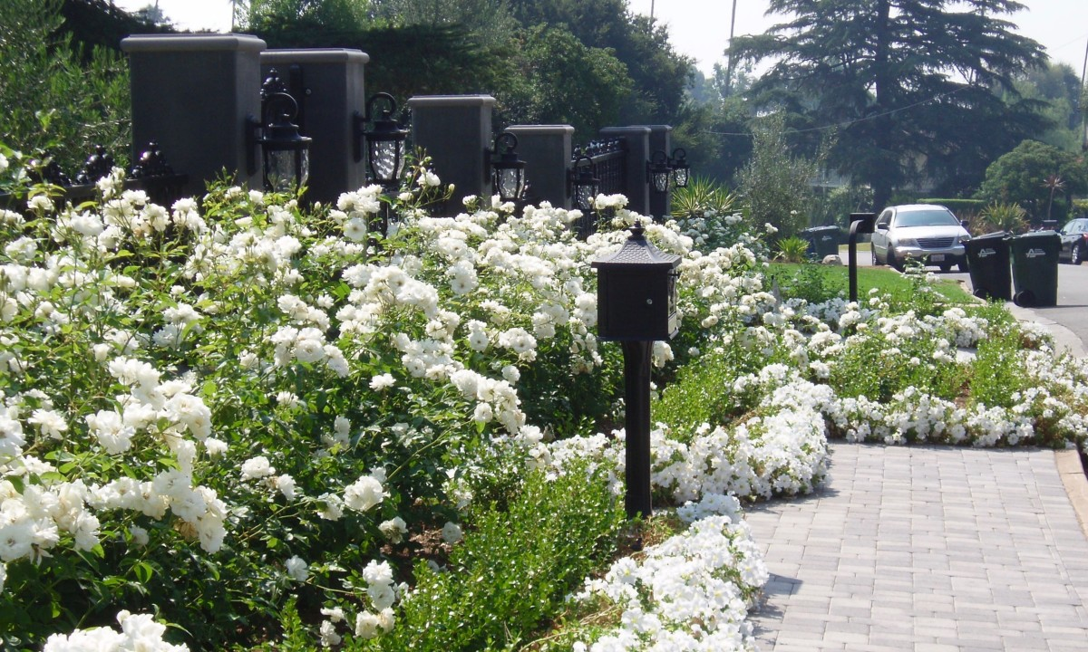 This homeowner has chosen an all-white theme focusing on roses, petunias, and light grey bricks.
