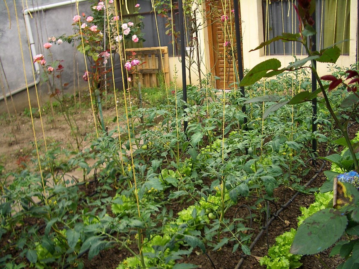 In many places it's possible to grow a little vegetable and flower garden in your front yard.