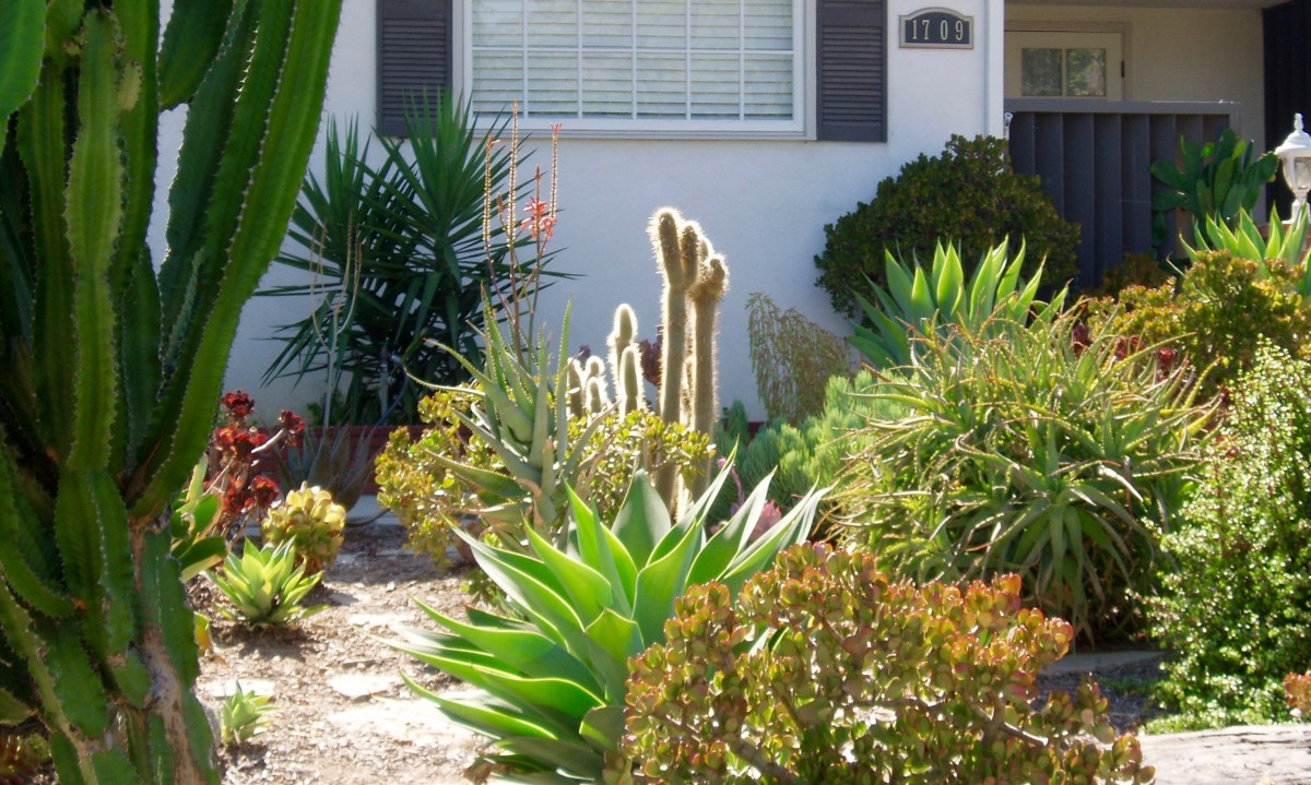 This garden has a variety of textures in smaller plants, placed so the shapes both blend and contrast with something. There are knobby, smooth, pointed, and prickly textures.