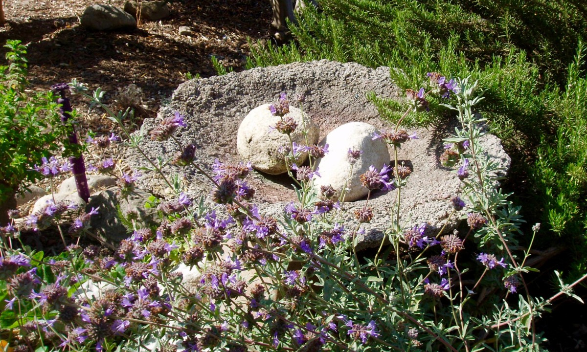 Here's a natural looking birdbath with no water in it. You can tell by the plants around it that this is a location with little rain. Still, the birth bath is shallow and has rocks in the middle for birdies to sit and dip when it is full.