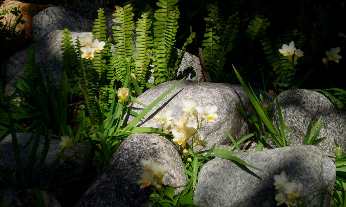 Big rocks used to protect delicate plants.