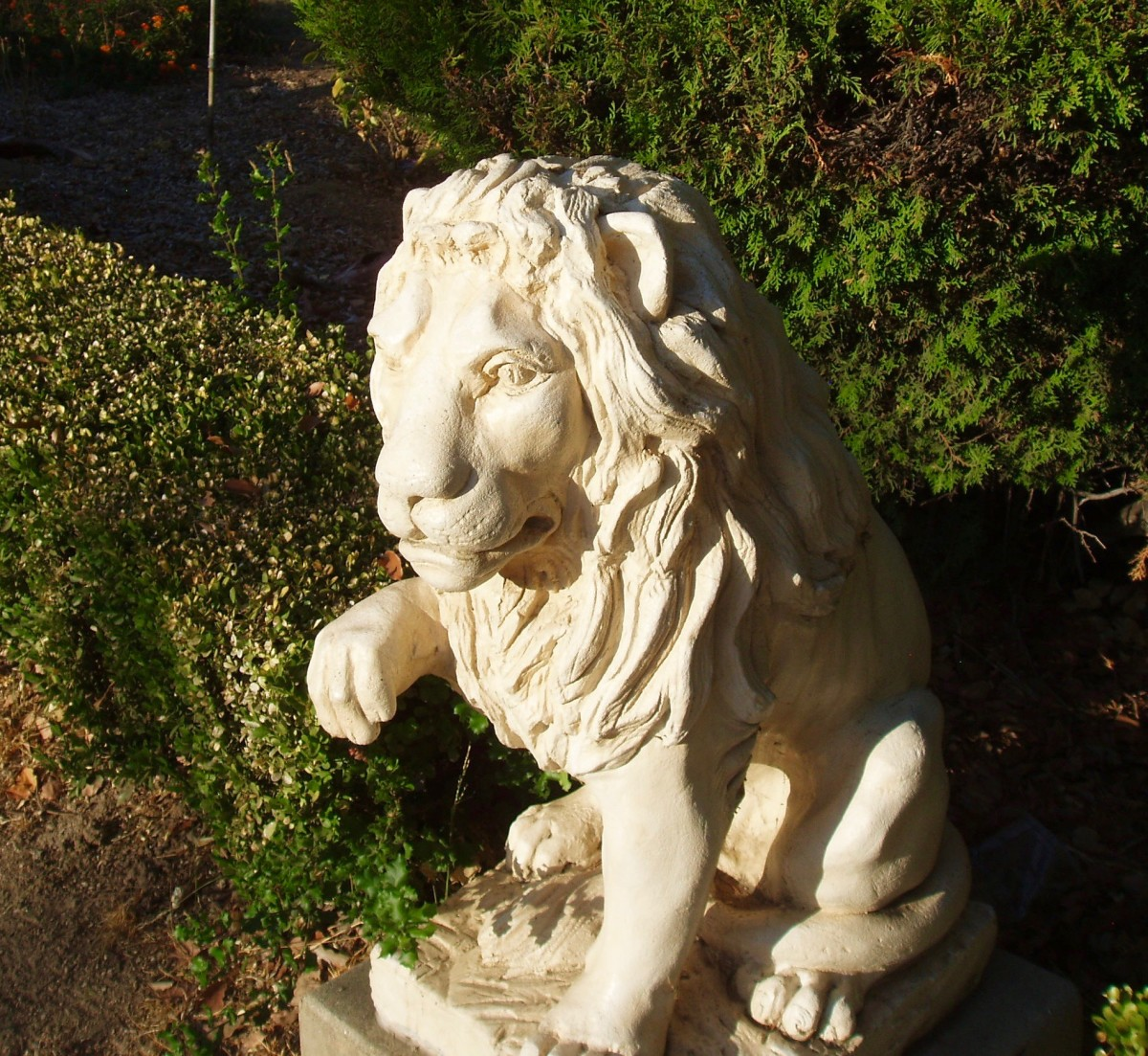 This is one of two lions placed at the entrance of a mansion in my neighborhood, one on either side of the front gate.