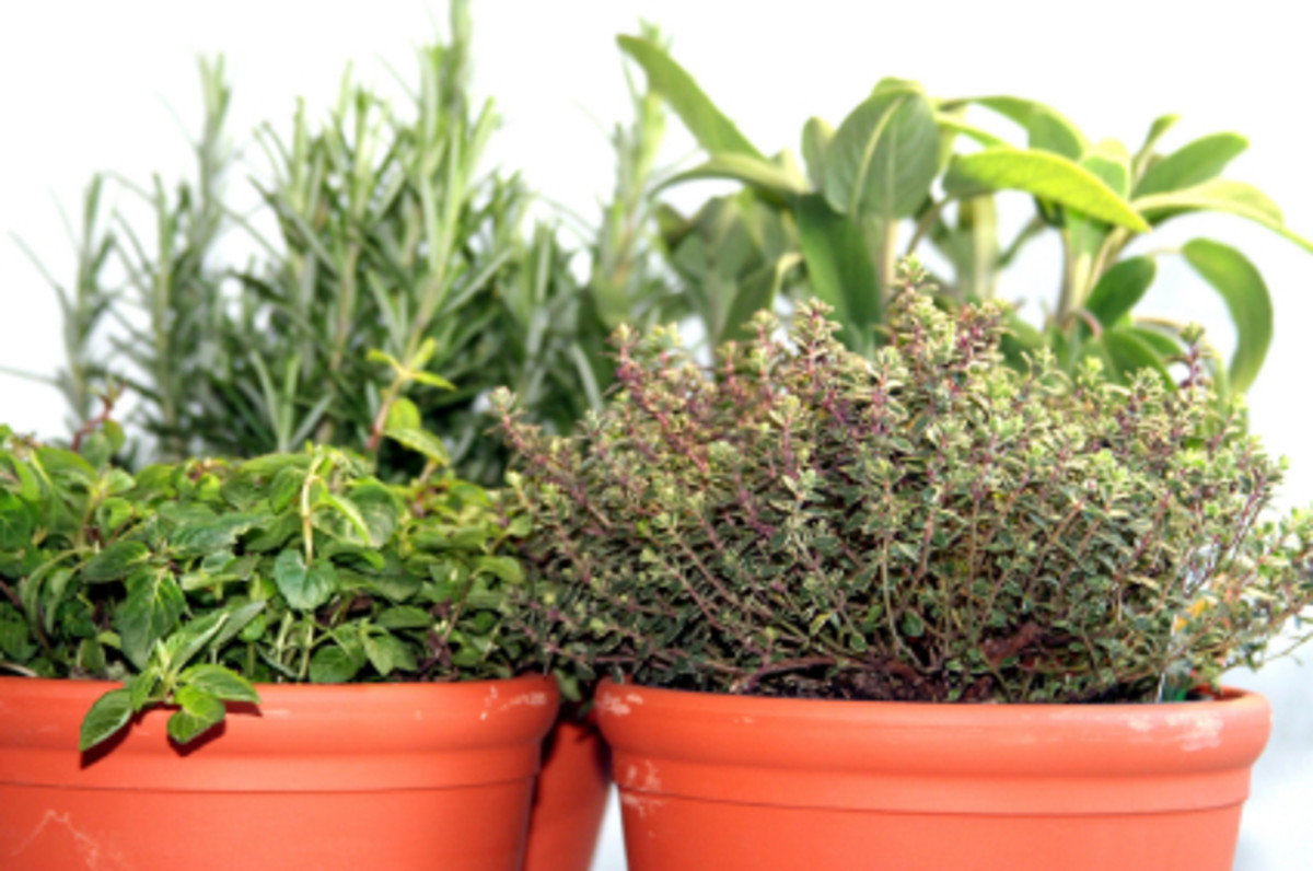 Although most are slow to grow from seeds, herbs are great candidates for indoor tabletop gardens--and they make spicing up a kitchen dish quick and convenient.