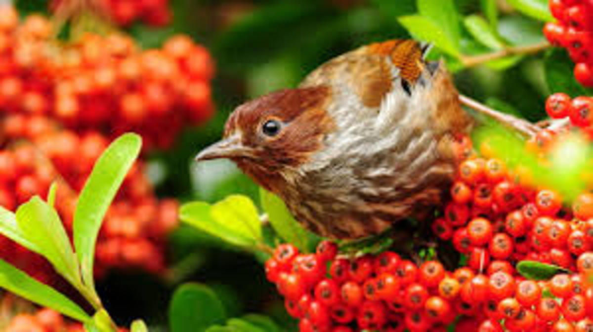 Berries, rosehips, and spent seed heads are delightful winter feasts for foraging birds: