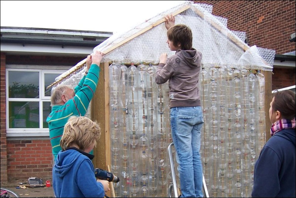 Insulating a plastic bottle greenhouse with bubble wrap.