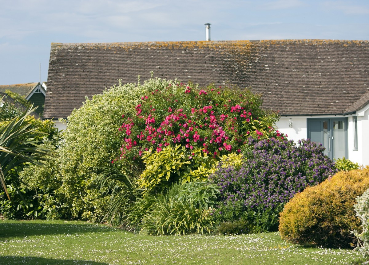 Natural hedges can be a mix of many species.