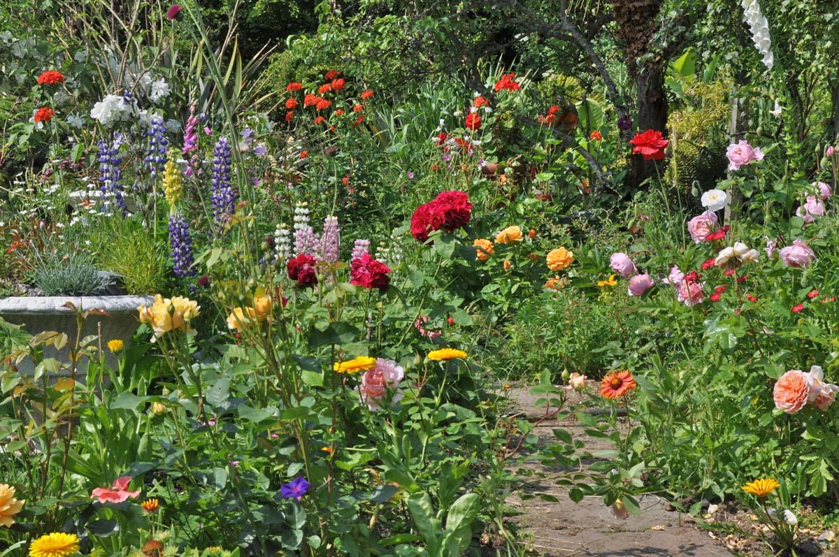 Flowering garden built on clay soil.