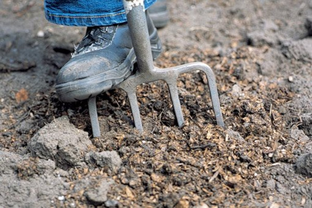forking organic material into clay soil to improve it