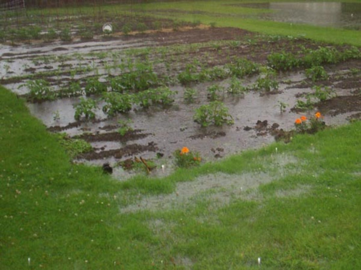How to improve clay soil and poor garden drainage for Yard flooding problems