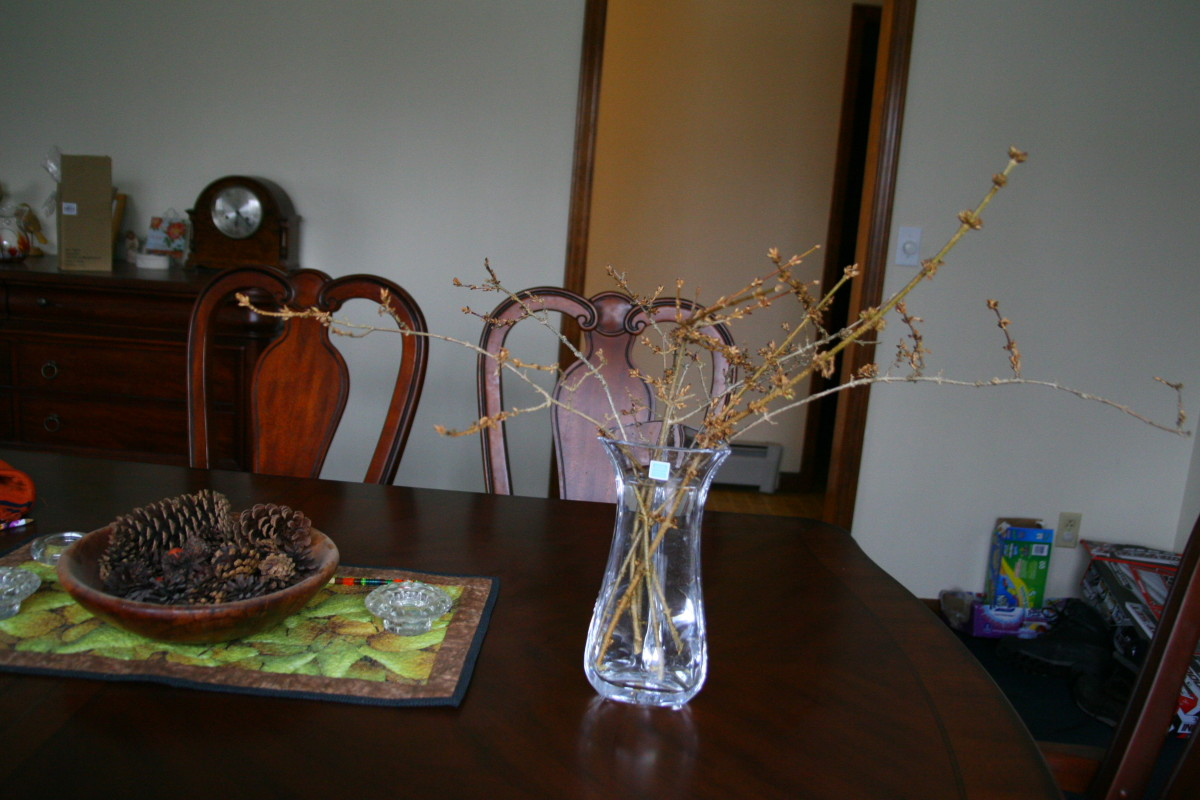 Place the branches in clean, tepid water and wait for the blooms to appear. Change the water every few days.