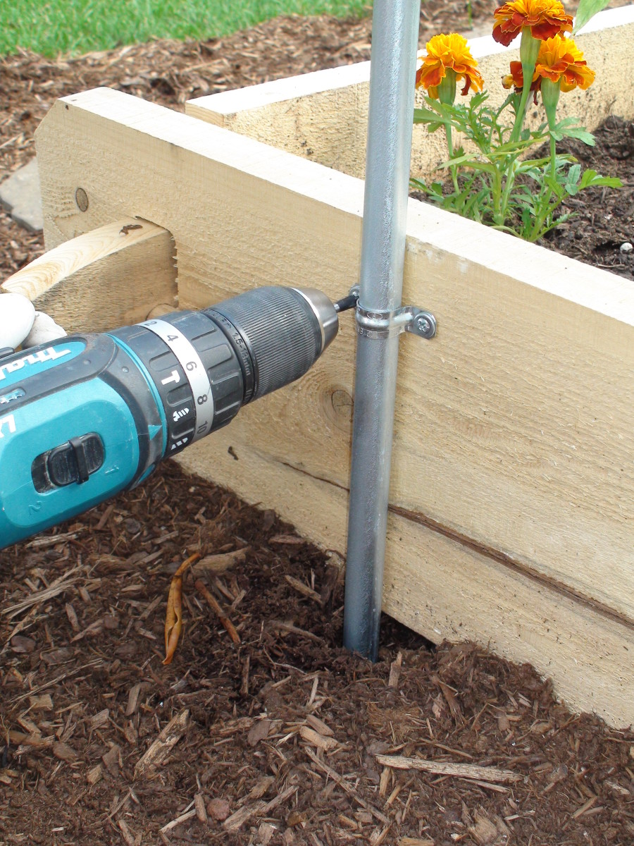 Securing the trellis to a raised bed with a U-bracket helps keep the trellis straight.
