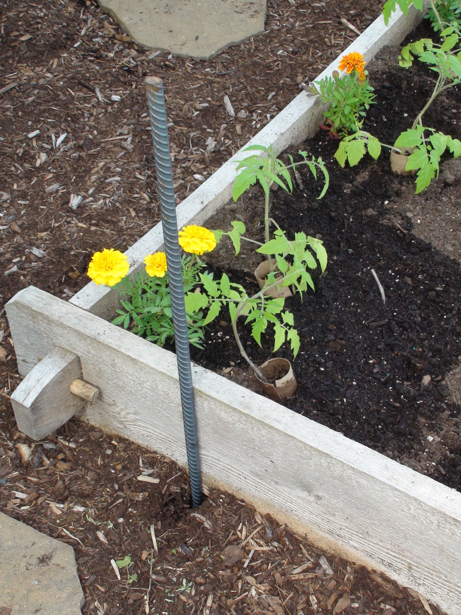 Rebar helps secure the trellis from wind and the weight of fruit and vegetables.