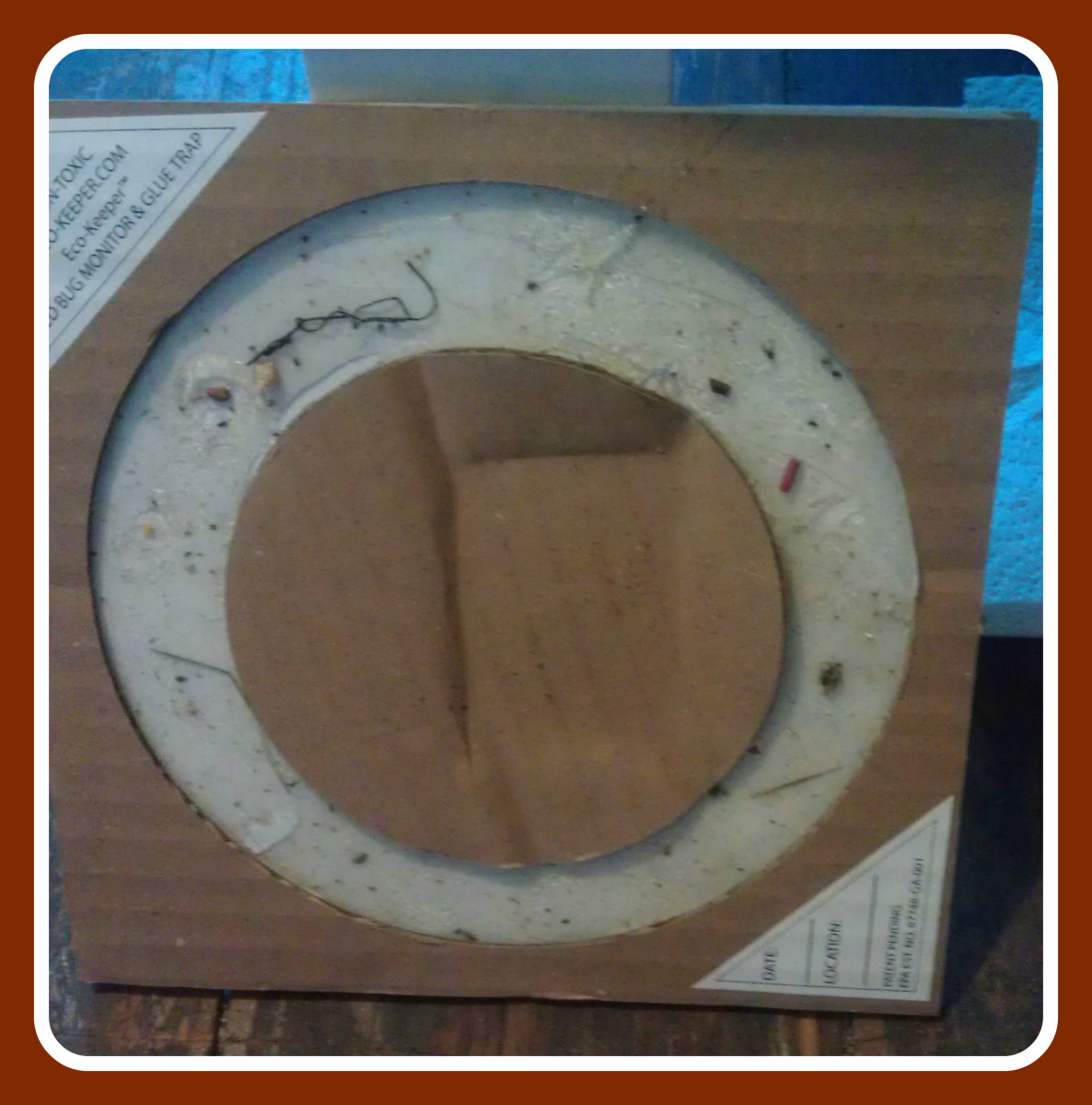 The Eco-Keeper Glue Trap. A type of bed bug prevention and treatment tool.