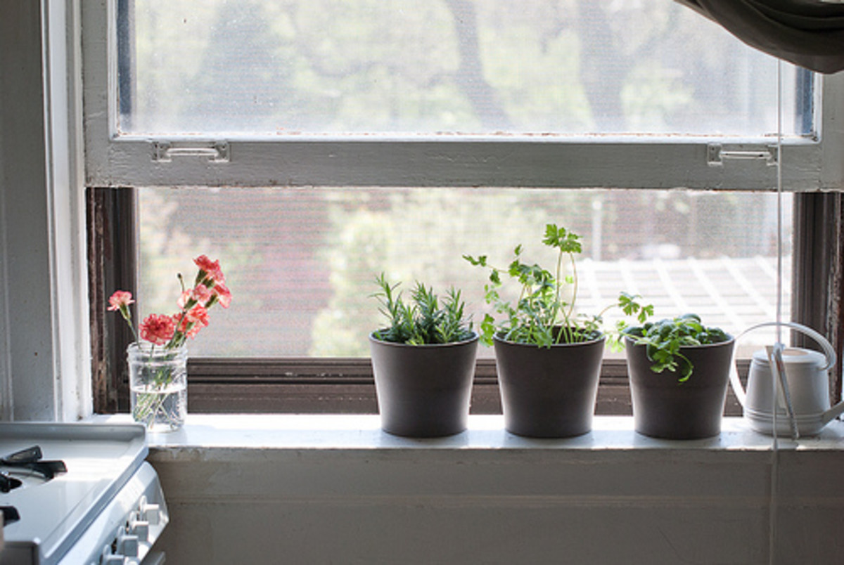 Decorating Your Kitchen with Live Plants