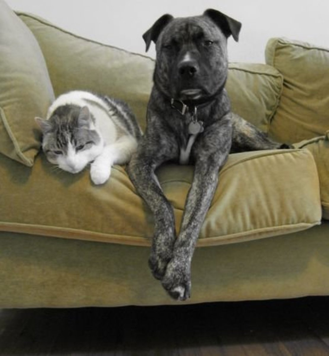 Your pets will be happy when the flea infestation is wiped out.