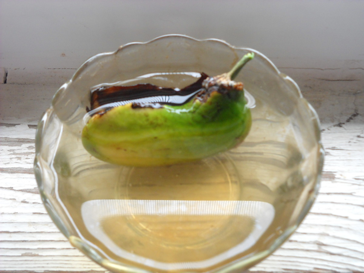 Sprouting a Mango Tree from Seed | Dengarden