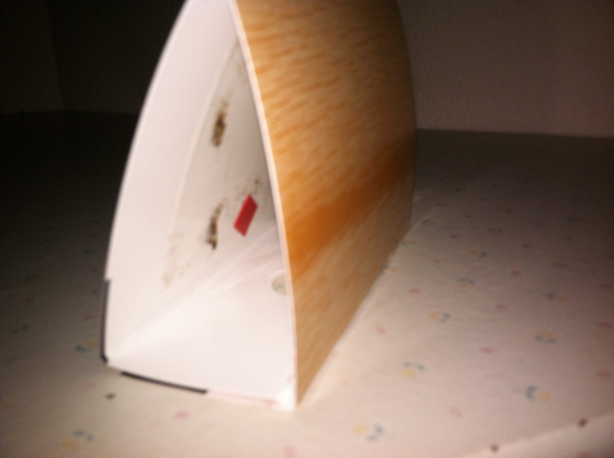 Male moths in trap. The red square is the pheromone lure, the rest of the tent has sticky paper on it to catch and kill them.