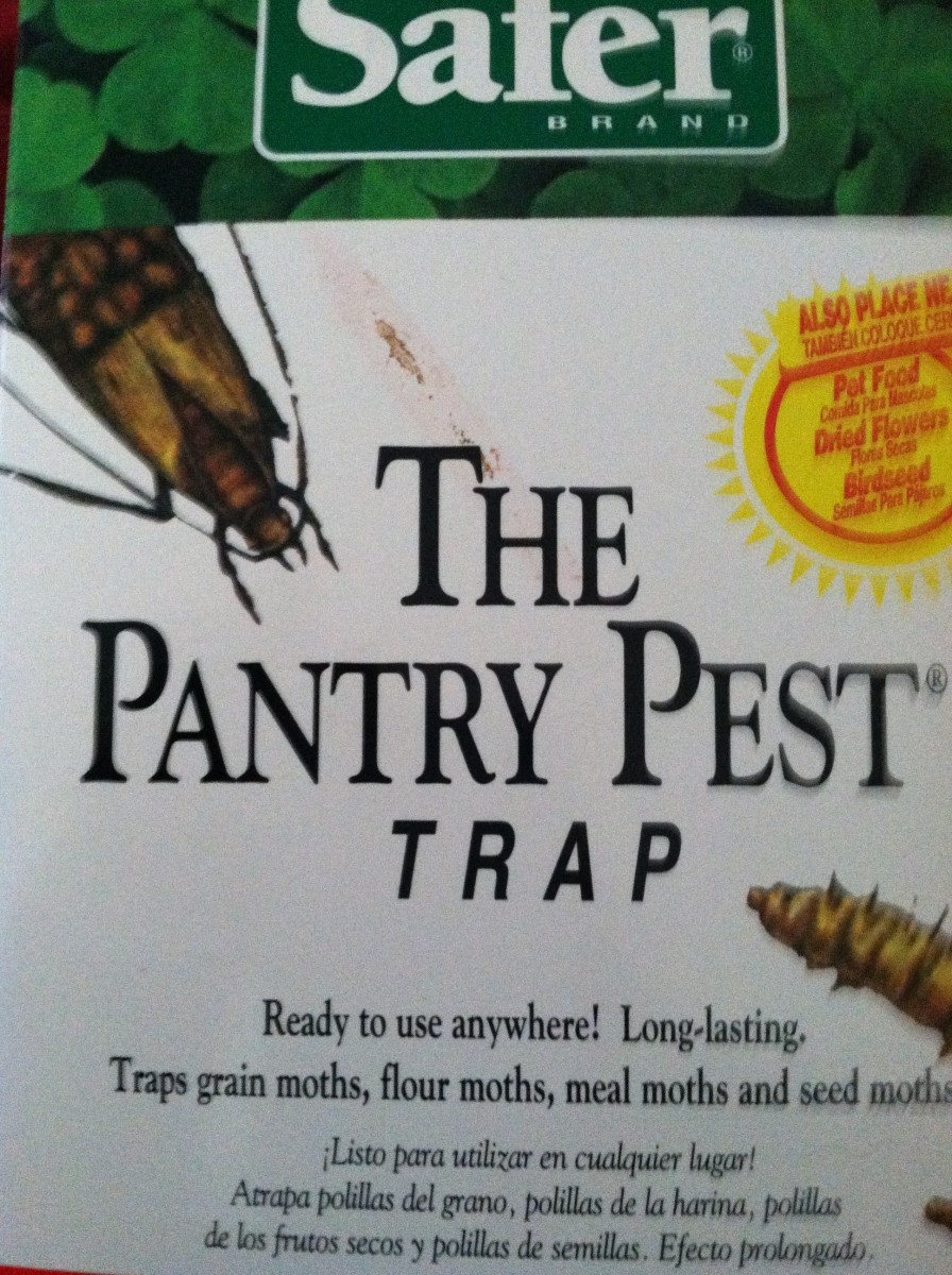 Sticky pheremone-luring pantry moth trap.