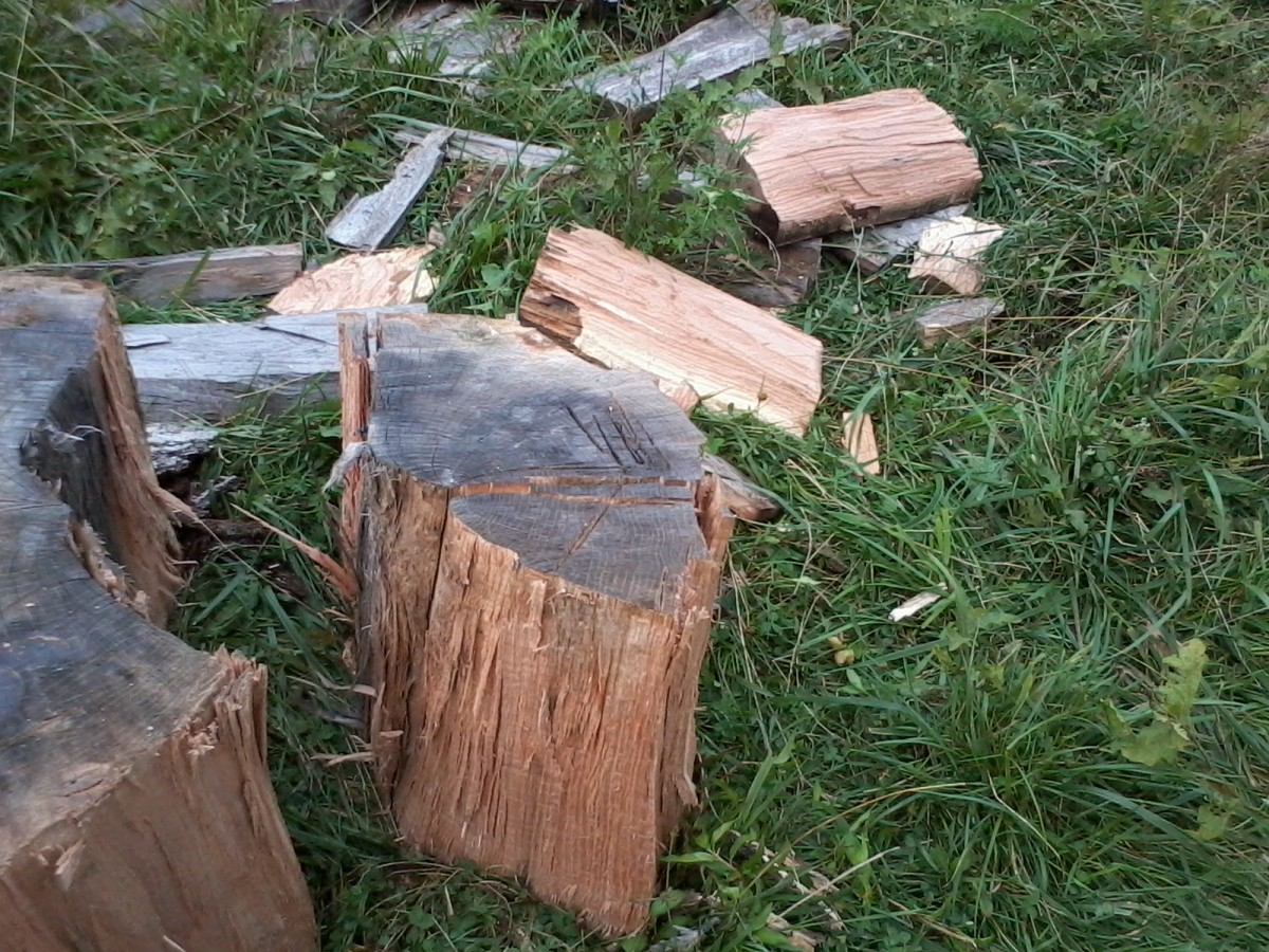 Turning this chunk of wood into a slice of pie. I will later go in the backdoor to take its heart.