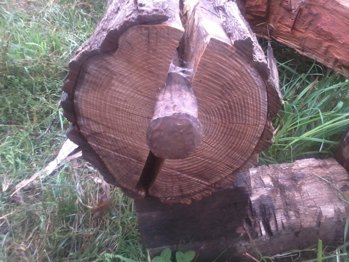 Drive the wedge into the line that you've drawn in the end-grain of the log.