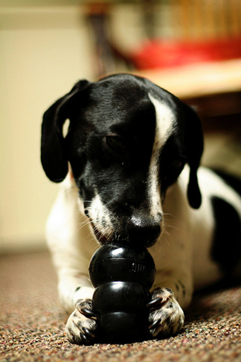 Give your pup clean rubber toys as opposed to slimy rawhides.