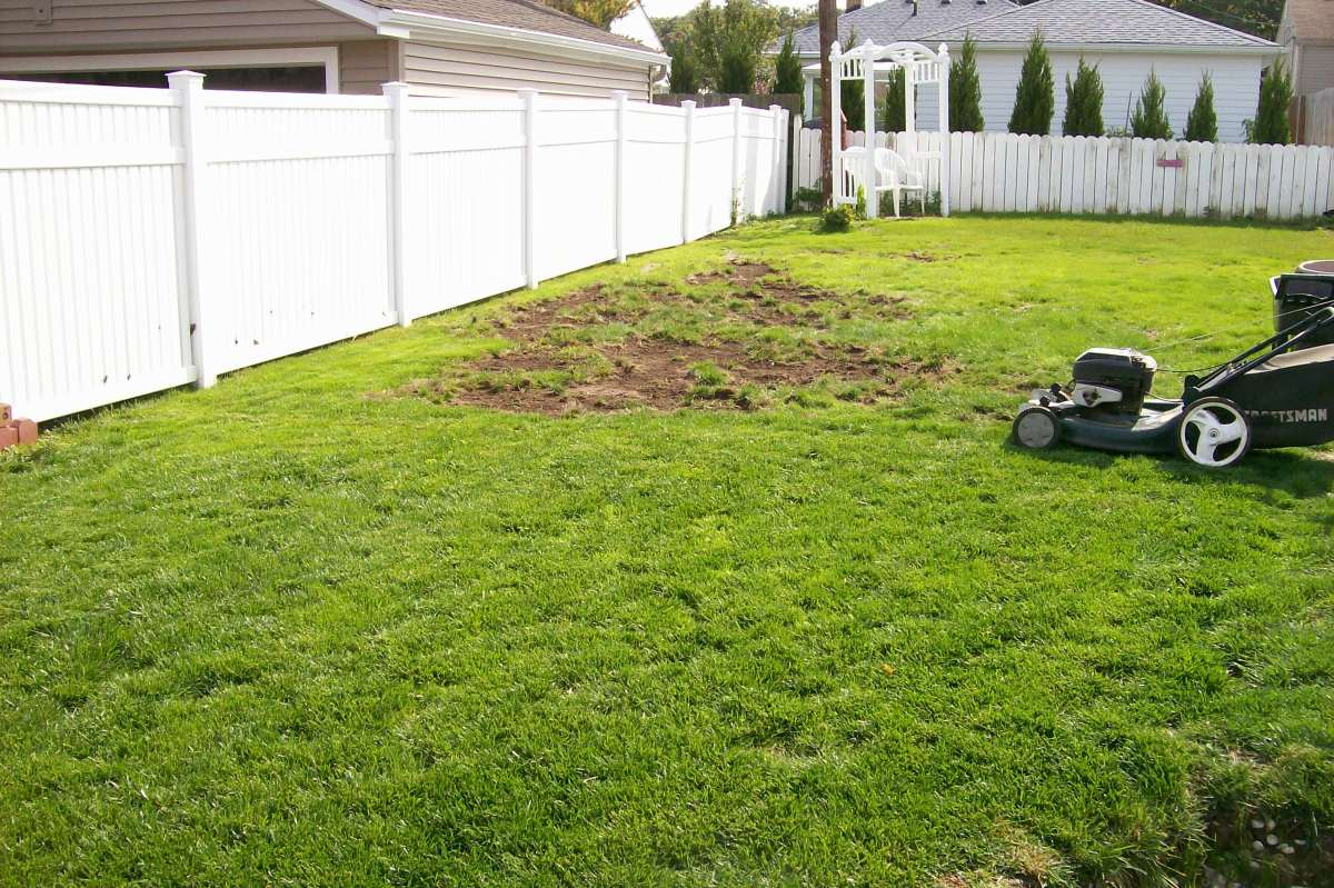 Get rid of the dry dug-up patches and if you can, discard any grubs you come across.