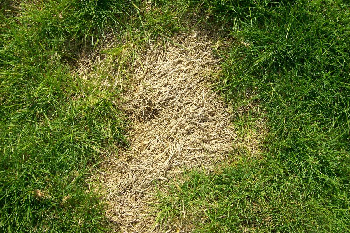 Dry patch from grub damage.