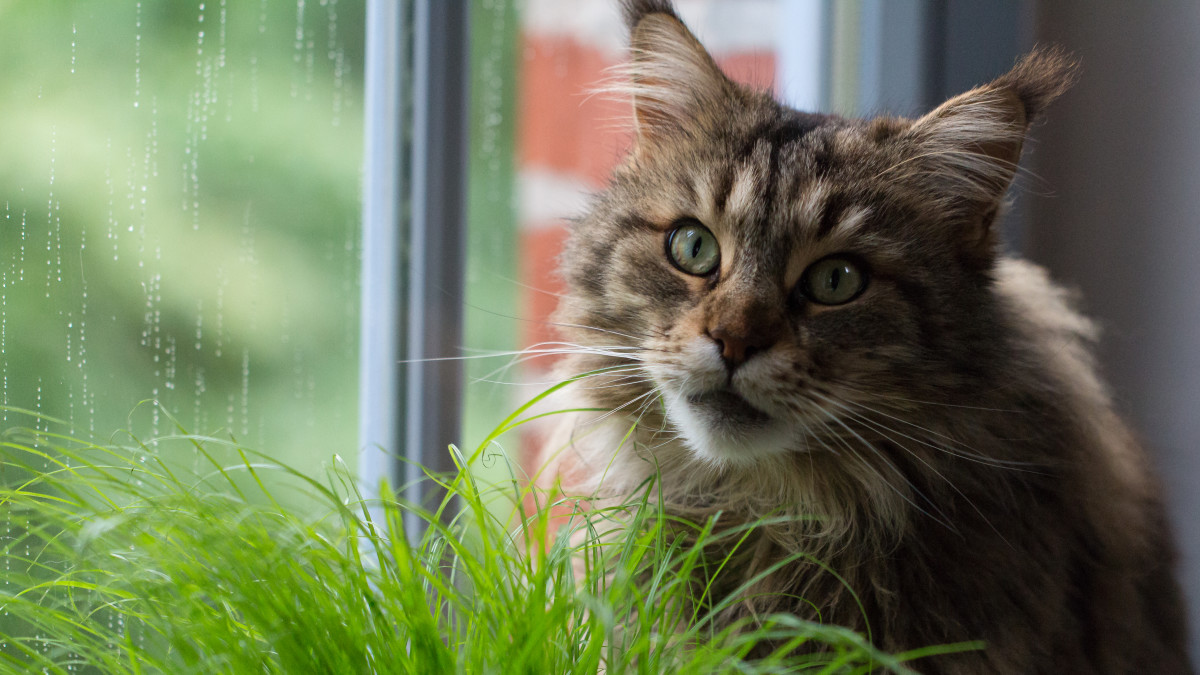 Providing safe plants for your cat to eat is one tip for keeping your pet healthy!