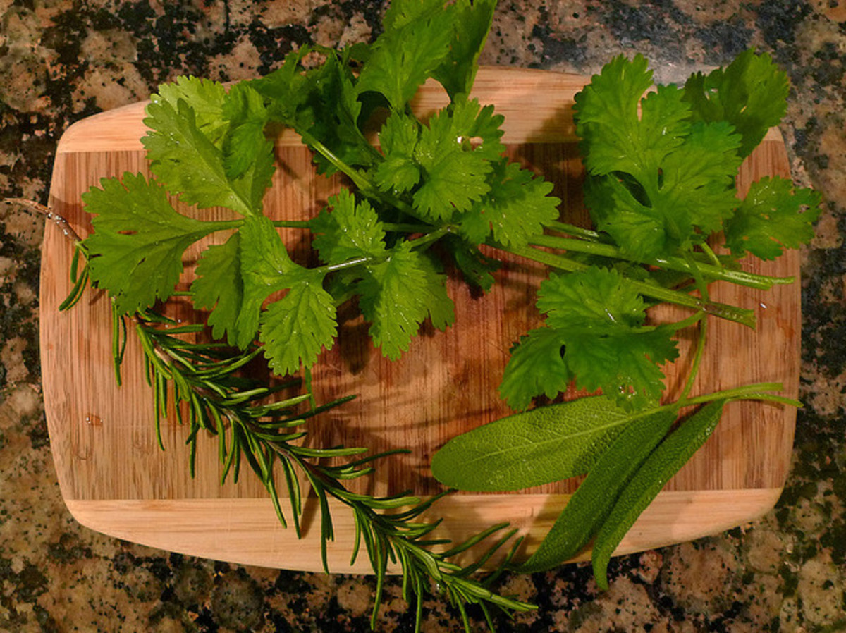 Fresh herbs: rosemary, cilantro, and sage from the garden.