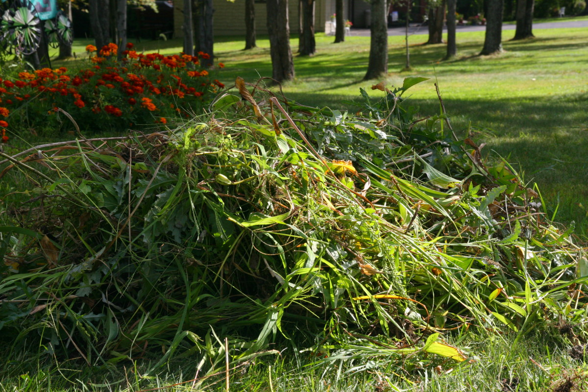 A pile of leaves pulled from the garden - this pile will become rich compost by late spring.