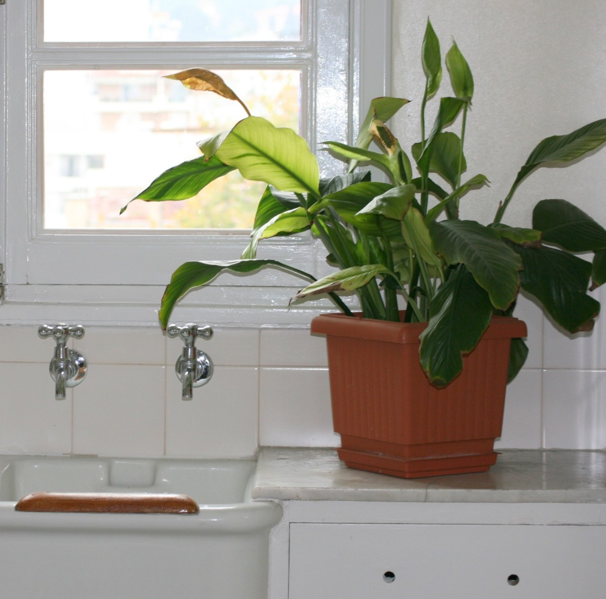 Leafy plants produce moisture from their leaves. Compost in flower pots is also a moisture source