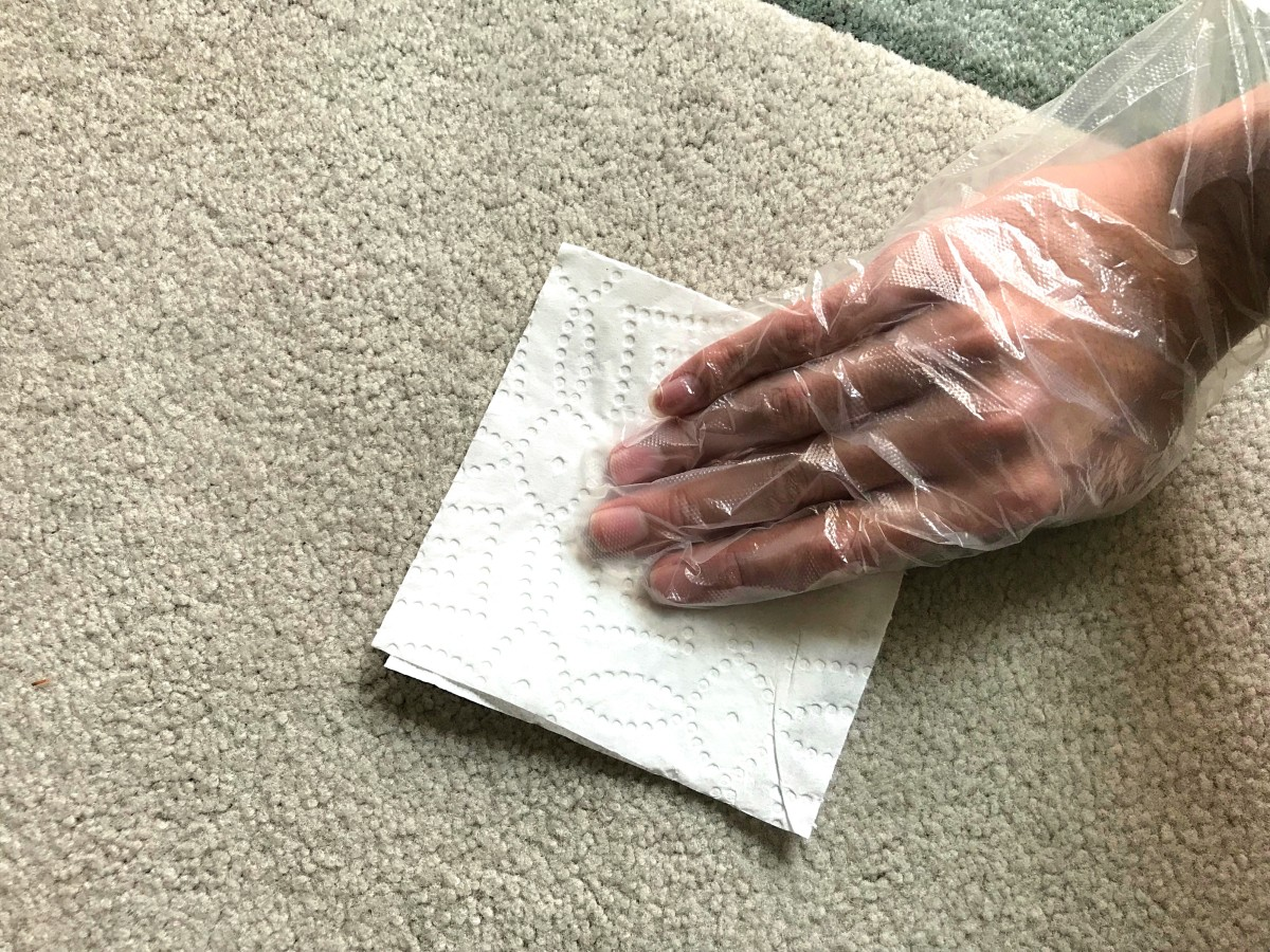 how-to-remove-the-smell-of-dog-urine-from-carpets