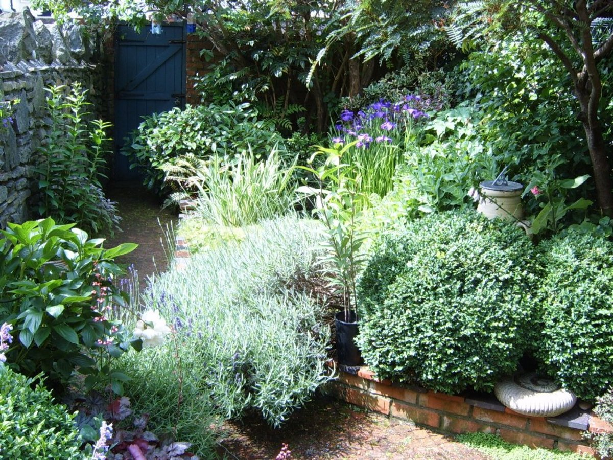 Our garden in June 2012 - photograph by HelenLush